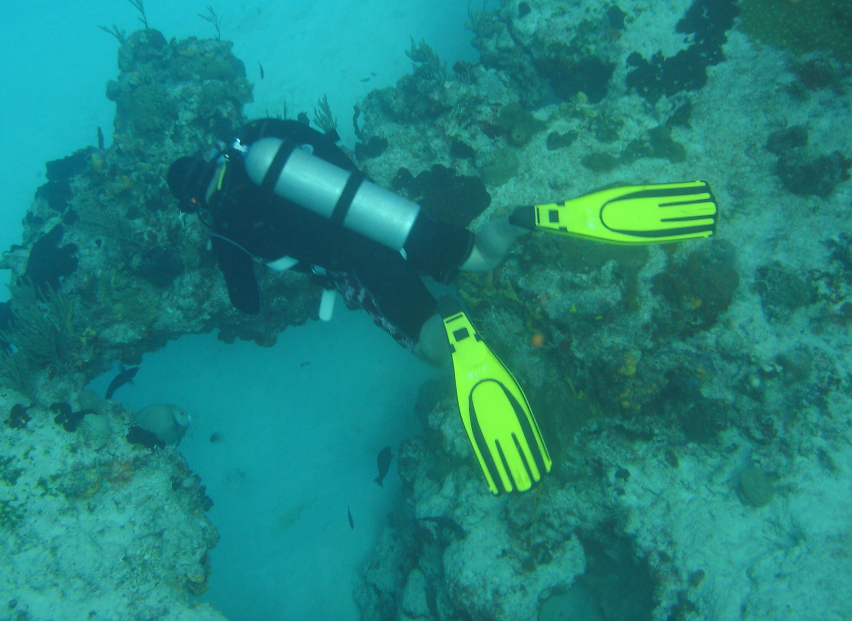 scuba travel with training